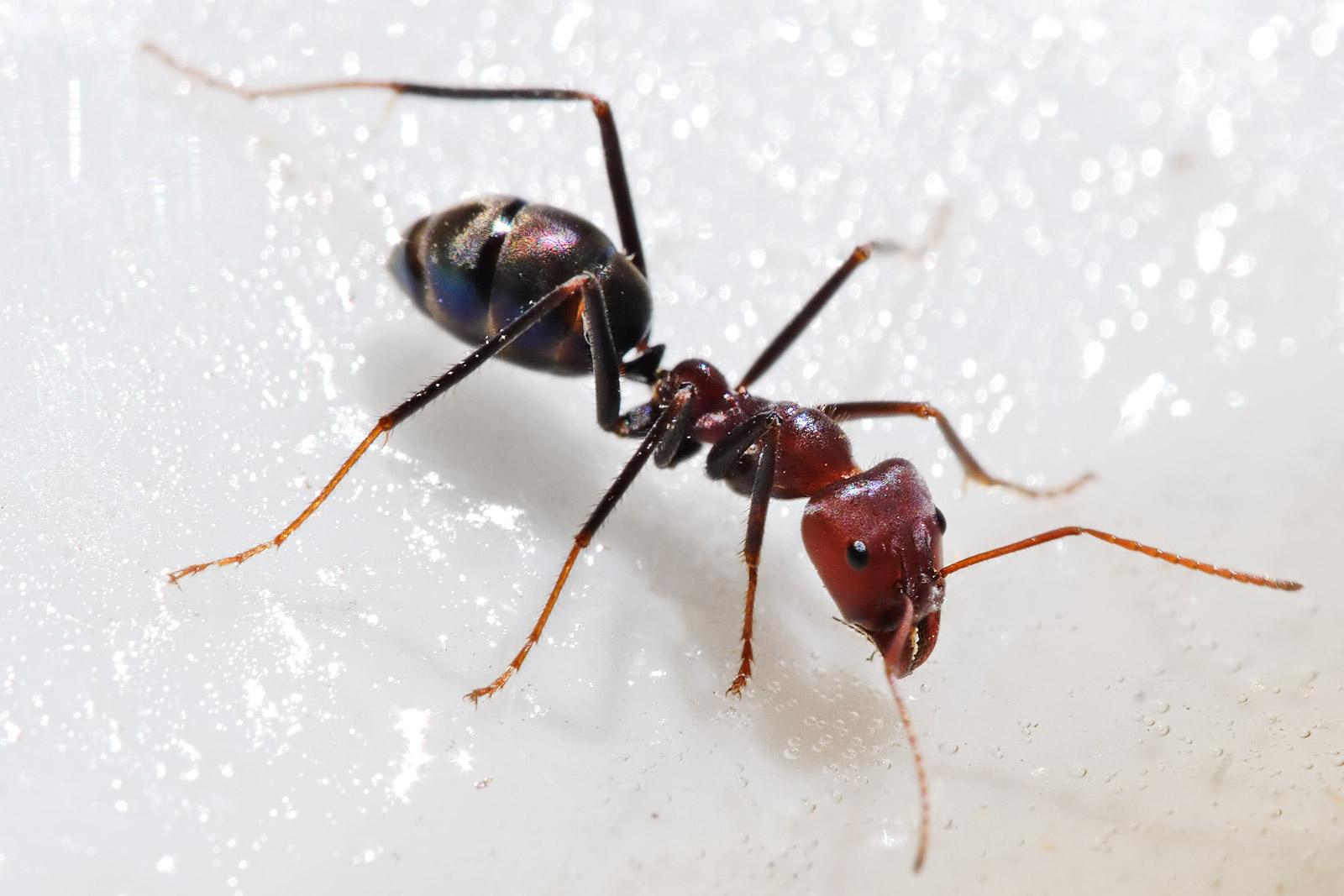 صورة تفسير حلم النمل لابن سيرين