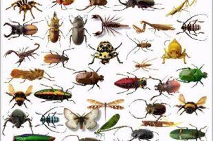 صورة بحث عن حشرات مفيدة مثل النحل