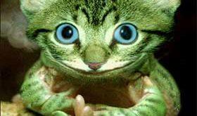 صورة فوتوشوب حيوانات
