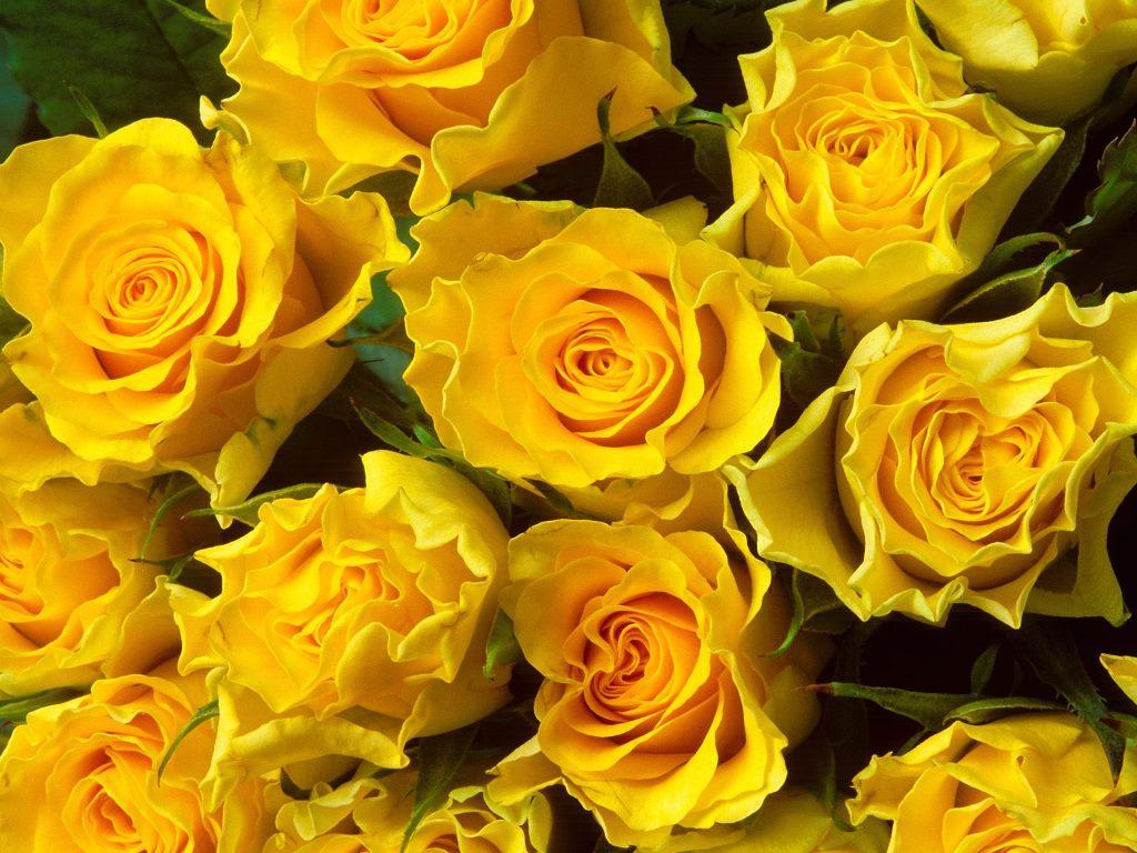 بالصور اجمل الزهار زهره جميله 20160819 4308