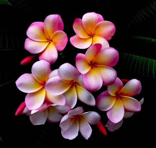 بالصور اجمل الزهار زهره جميله 20160819 4309