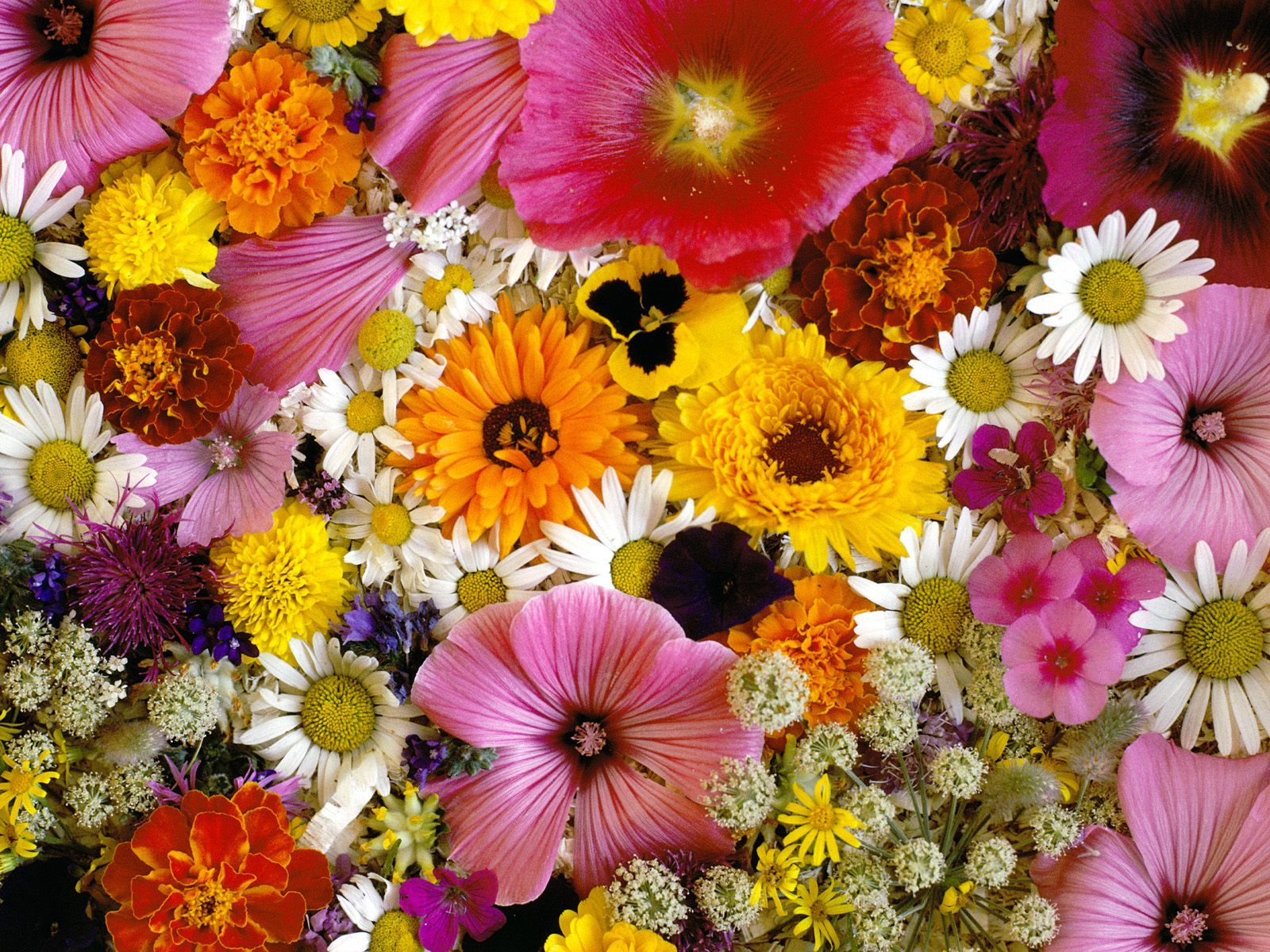 بالصور اجمل الزهار زهره جميله 20160819 4310