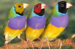 صورة تفسير حلم العصافير الملونة