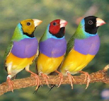 صور تفسير حلم العصافير الملونة