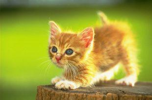 صور صور قطط اليفة