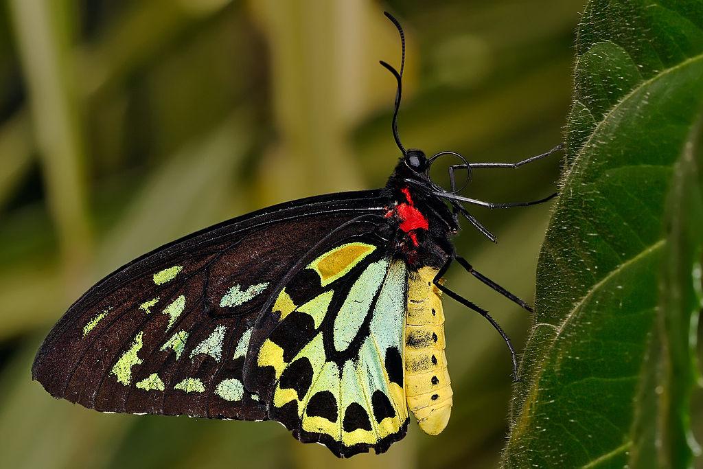 صورة ما اسم ذكر الفراشه
