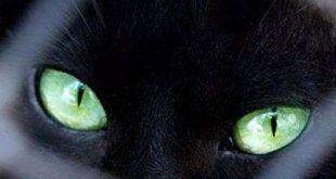 بالصور القطط والجن 20160819 5260 1 310x165