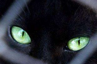 صور القطط والجن