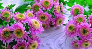 صورة ورد وزهور