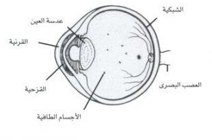 صورة علاج الاجسام الطافية في العين بالاعشاب