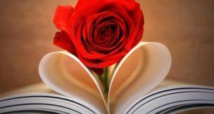 صورة الورد الجوري في المنام