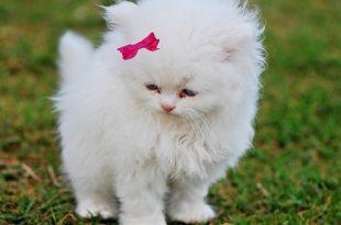 صورة اجمل قطة في العالم