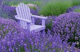 صورة الكراسي في المنام