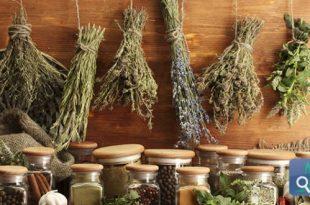 صورة اعشاب لداء السكري