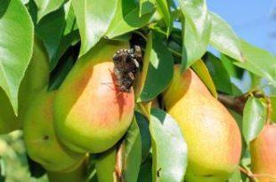 صورة حشرات مفيدة مثل النحل