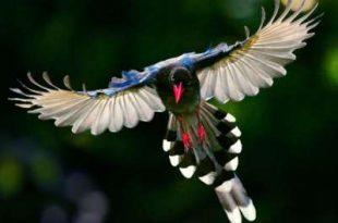 صورة طيور نادرة