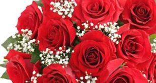 صور الورود والزهور