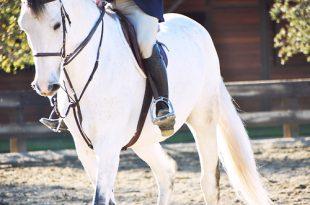 صورة رؤية الحصان في المنام
