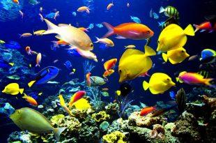 بالصور تفسير سمك الزينة في المنام 20160820 473 1 310x205