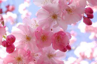 بالصور اجمل صور زهور في العالم 20160820 5174 1 310x205