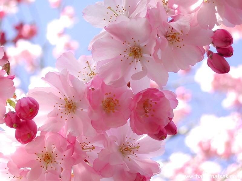 صورة اجمل صور زهور في العالم