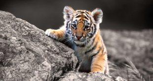 صور صور حيوانات hd