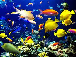 خلفيات سمك متحركة صباح الخير