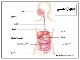 صورة الهضم الالي والهضم الكيميائي