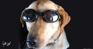 صورة صور كلاب مضحكه