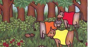 كرتون البقرات