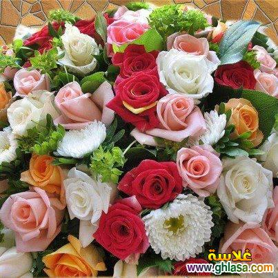 صور بوستات زهور