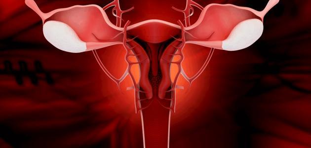 صور الفرق بين افرازات الدورة وافرازات الحمل قبل الدورة بيومين