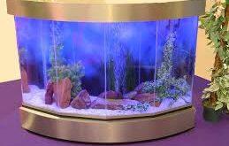 صورة احواض سمك