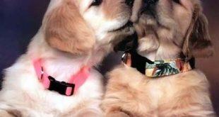 صورة كلاب في الحب