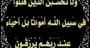 صورة لا تحسبن الذين قتلوا في سبيل الله امواتا بل احياء