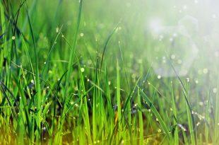 صورة تفسير الاحلام العشب الاخضر