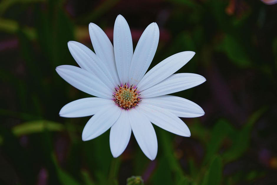 بالصور اجمل صورة وردة , ورود جميله هديه لحبيبتك