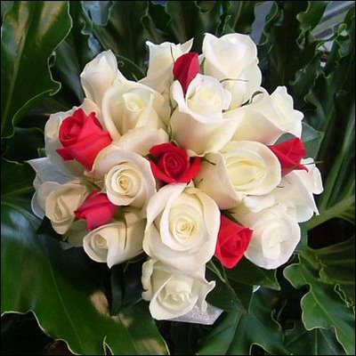 بالصور اجمل صورة وردة , ورود جميله هديه لحبيبتك 42871 1