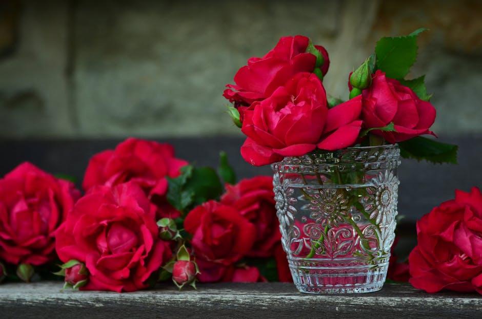 بالصور اجمل صورة وردة , ورود جميله هديه لحبيبتك 42871 2