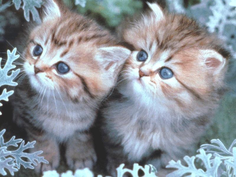 بالصور اجمل واروع القطط صور , قطط كيوت في العالم 42888 1