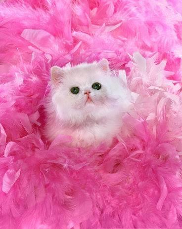 بالصور اجمل واروع القطط صور , قطط كيوت في العالم 42888 2