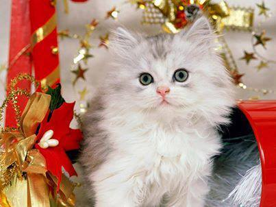 بالصور اجمل واروع القطط صور , قطط كيوت في العالم 42888 3