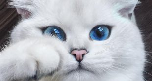 بالصور اجمل واروع القطط صور , قطط كيوت في العالم 42888 4 310x165