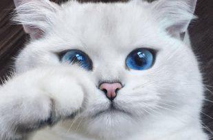 صور اجمل واروع القطط صور , قطط كيوت في العالم