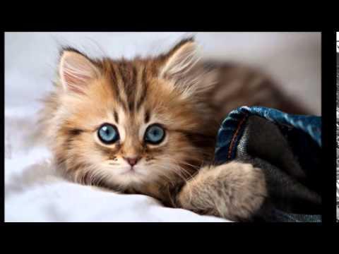 صورة اجمل واروع القطط صور , قطط كيوت في العالم