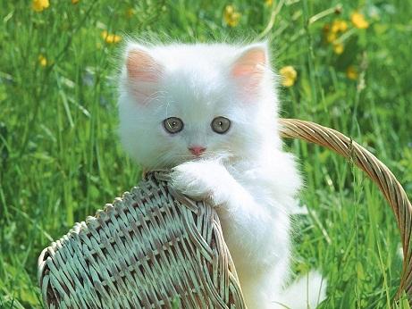 بالصور اجمل واروع القطط صور , قطط كيوت في العالم 42888 7