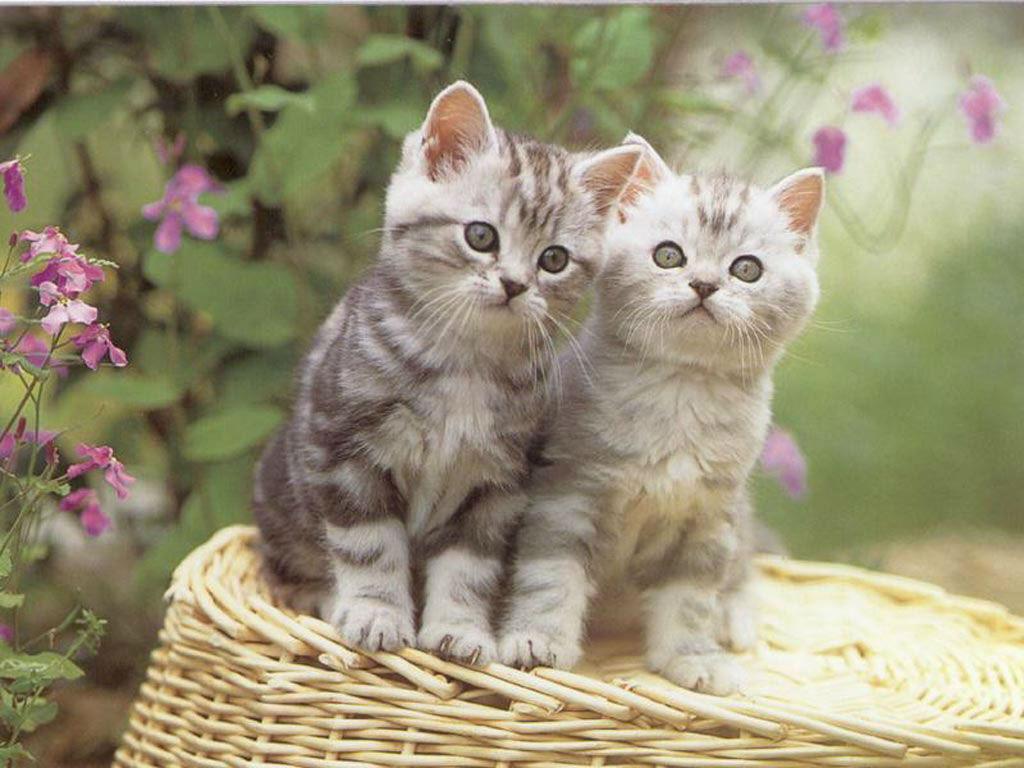 بالصور اجمل واروع القطط صور , قطط كيوت في العالم 42888 9